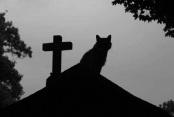 cemetery-cat